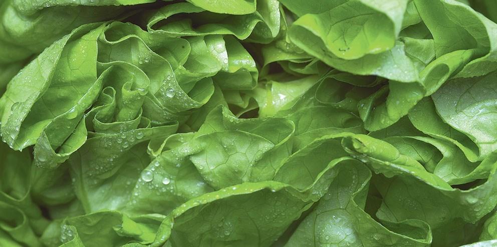 салаты лазанья